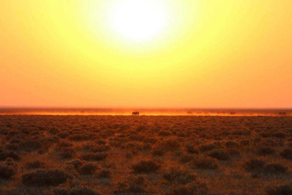 A guide to the seasons of Namibia and when to go to Namibia - Vreugde Guest Farm