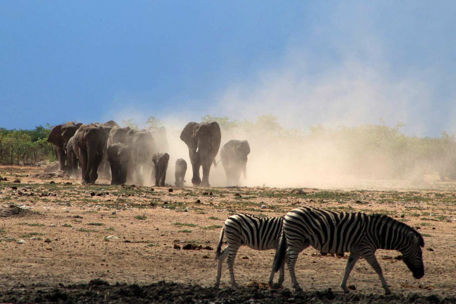 How to make the most of Etosha activities and Etosha weather - Vreugde Guest Farm