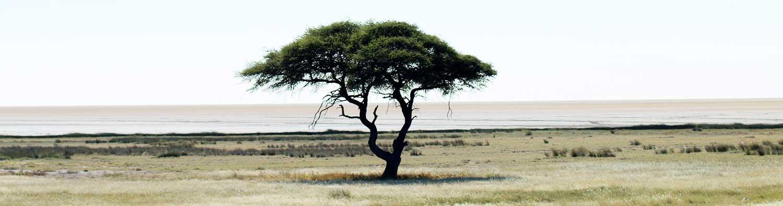 Tree in Etosha - Best time to visit Namibia - Namibia weather - Vreugde Guest Farm