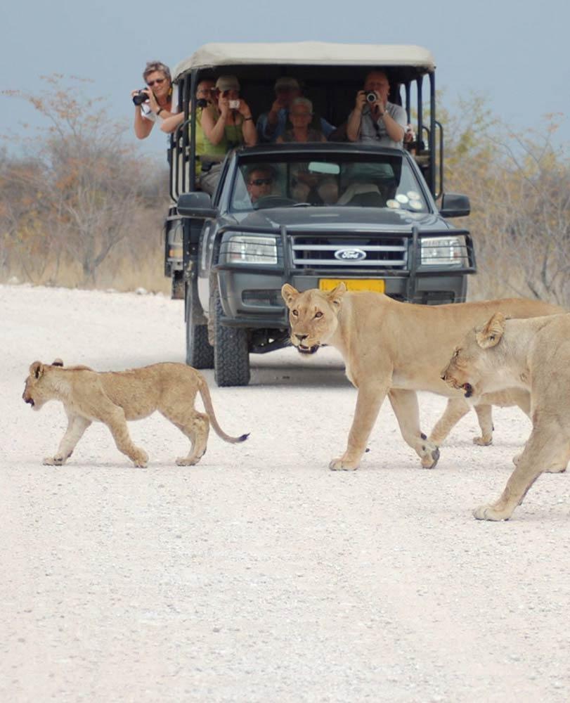 Lions in Etosha National Park - Etosha Namibia - Etosha Pan - Vreugde Guest Farm