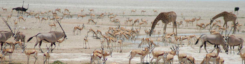 Animals at a waterhole - Etosha National Park - Etosha Safari - Vreugde Guest Farm