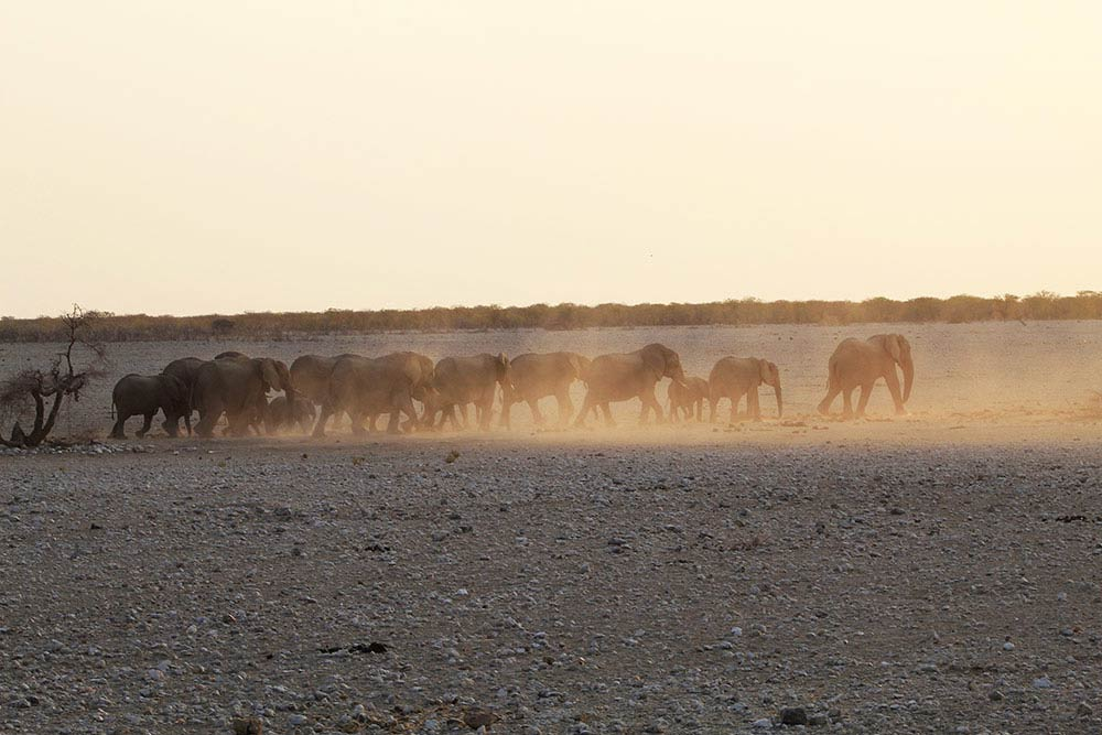 Elephants in Etosha - Namibia info - Interesting facts about Namibia - Vreugde Guest Farm
