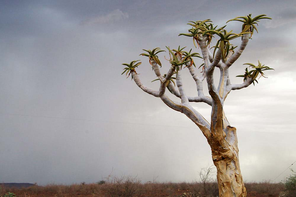 Guest Farm Quiver Tree in Namibia - Namibia info - Interesting facts about Namibia - Vreugde Guest Farm